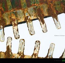 """""""Excavadora"""" (Deforestación amazónica). A Advertising project by Pedro Mozas Rello - Sep 16 2010 12:55 PM"""