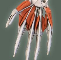 Atlas Anatomía. Un proyecto de 3D de javier  regueiro - Lunes, 18 de octubre de 2010 11:56:01 +0200