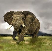 Elephant. Un proyecto de Ilustración de nanonen         - 09.05.2011
