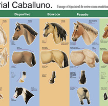 Caballos-Infografía rasgos de. Un proyecto de Diseño e Ilustración de Isabel Martín - Jueves, 26 de septiembre de 2013 15:18:51 +0200