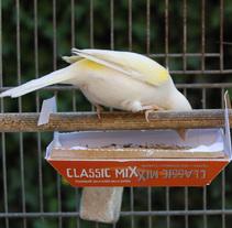 Packaging de alimento para canarios. Un proyecto de Packaging de Pam Lustig - Diseñadora Industrial         - 16.05.2012