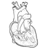 Anatomia. Un proyecto de Ilustración de ivan chacon         - 27.11.2014
