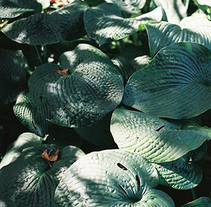 plantas. A Photograph project by Amelia Garcia - 06-01-2015