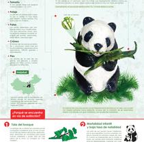 El oso panda o panda gigante. Um projeto de Design gráfico de lizeth avendaño - 04-02-2016
