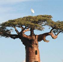 Tree with a view. Um projeto de Consultoria criativa e Design gráfico de Angel Asperilla         - 12.06.2016