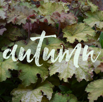 Autumn | Lettering. A Advertising, Photograph, Editorial Design, Graphic Design, and Lettering project by gema_yague - 17-10-2017